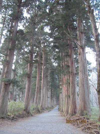 戸隠神社奥社・杉並木